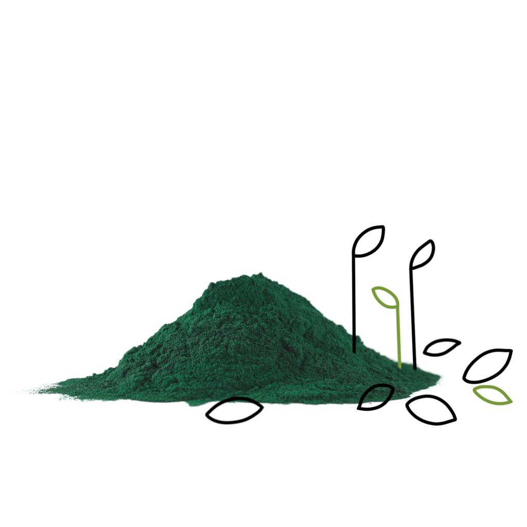 alga spirulina powder